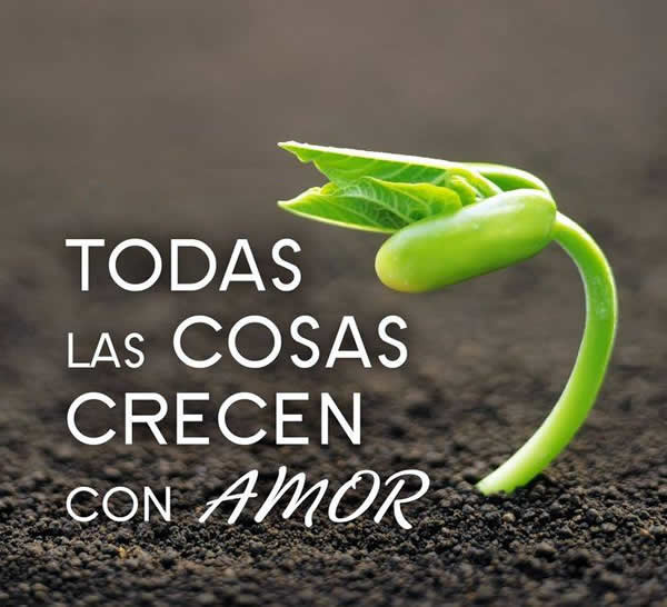 El amor crece día a día
