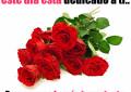 Imagenes de rosas rojas con frases