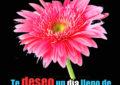 Imagenes bonitas de rosas rosadas
