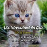 20 de Febrero Dia internacional del Gato